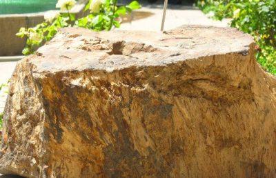 تنه درخت در موزه سنجش