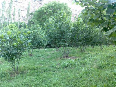 طبیعت روستای برنقور (استان زنجان- ابهر)