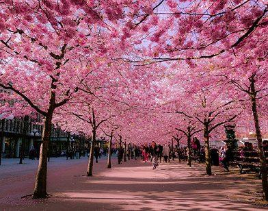 فصل بهار در کشور گرجستان