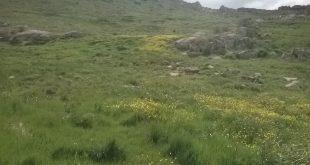 برج سنگی با کتیبه کوفی در روستای طارم قزوین