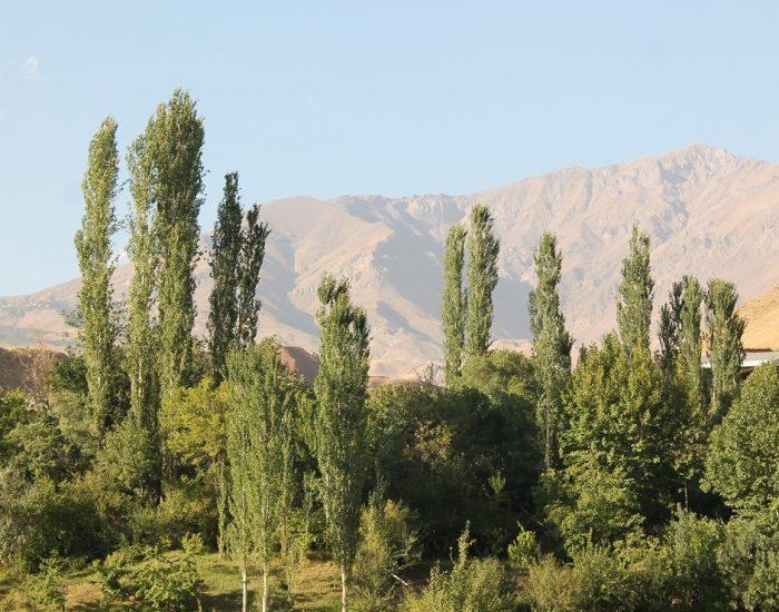 پوشش گیاهی روستا