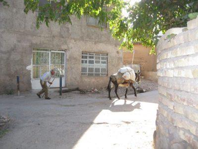 محیط آرام روستای زرآباد قزوین